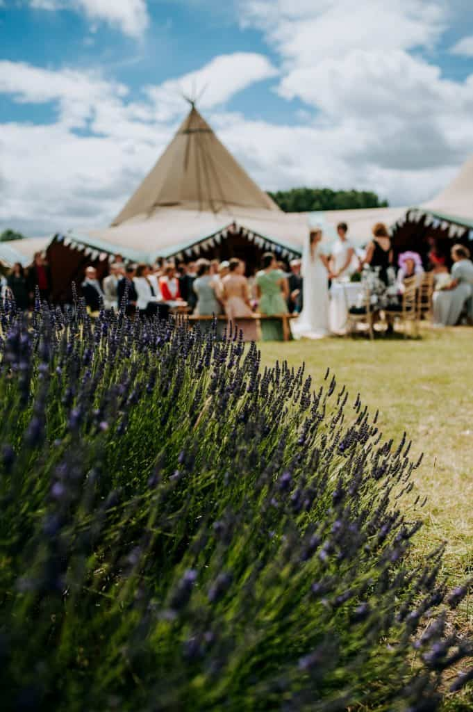 Lavender in the foreground with wedding tipis and guests in the background